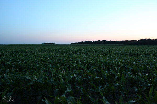 トウモロコシ畑?に入っていたらだいぶ暗くなってきました。 帰り道は真っ暗でしたが、この近所に住む友人には全部はっきり見えていておどろきました。