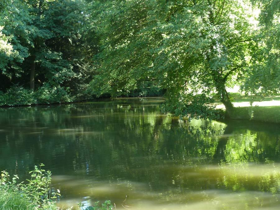 シャマランド城の森の水辺