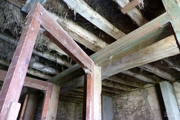 フランス 乗馬学校 ワイルドな天井