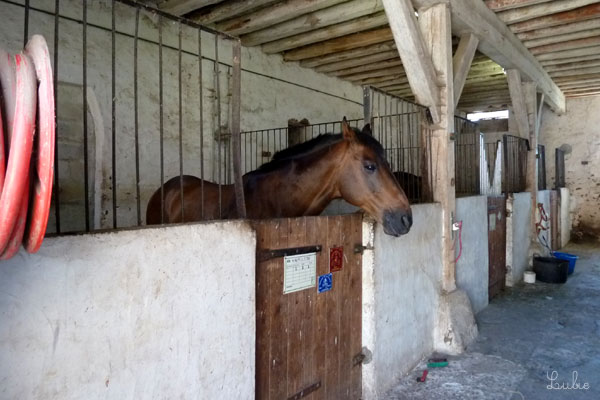 フランス 乗馬学校 馬小屋