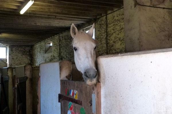 フランス 乗馬学校 馬と目が合った