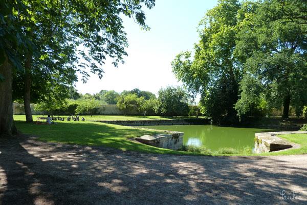 小さな池。左奥に何かが... 鳥かな?