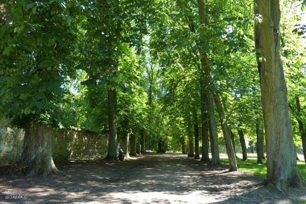 揺れる葉っぱの音を聞きながら歩いて、Pigeonnierに向かいます。