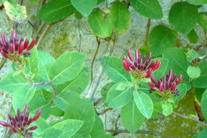 紫色の植物