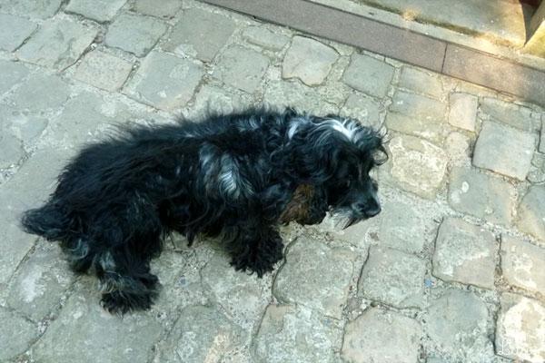 お城で飼われている犬