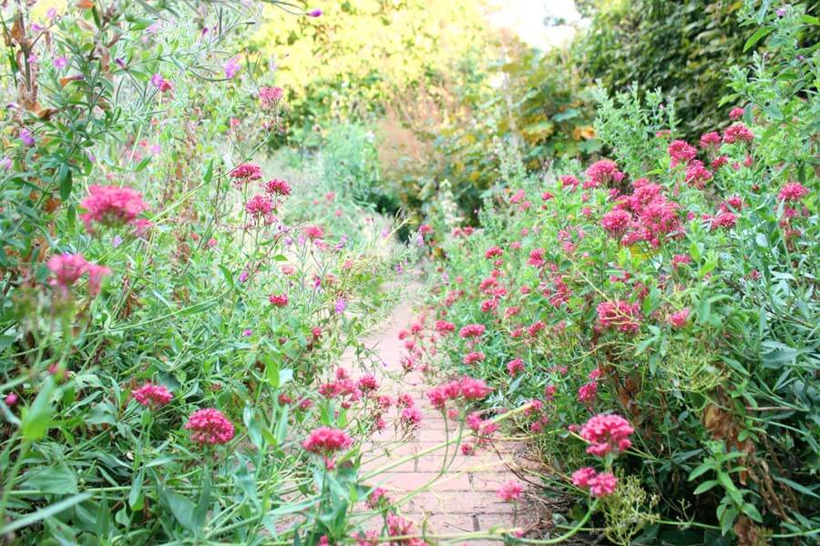 Jardin Yitzhak Rabinの花