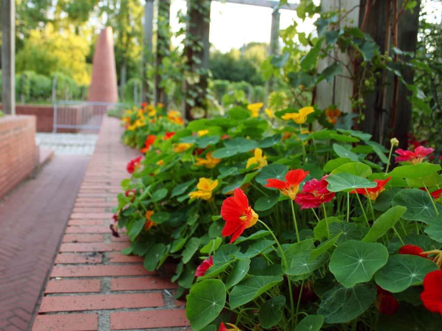 Jardin Yitzhak Rabinの花壇