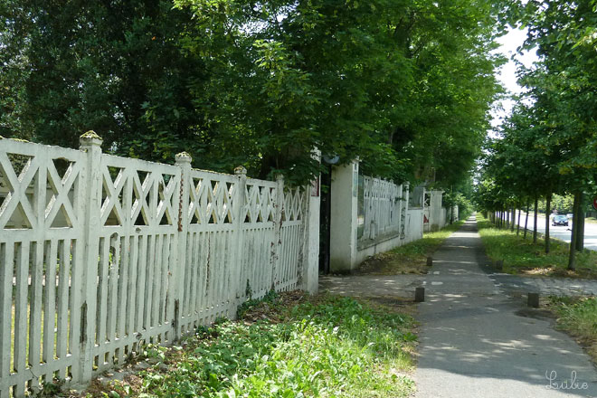 緑の並木の散歩道。きもちいい♪