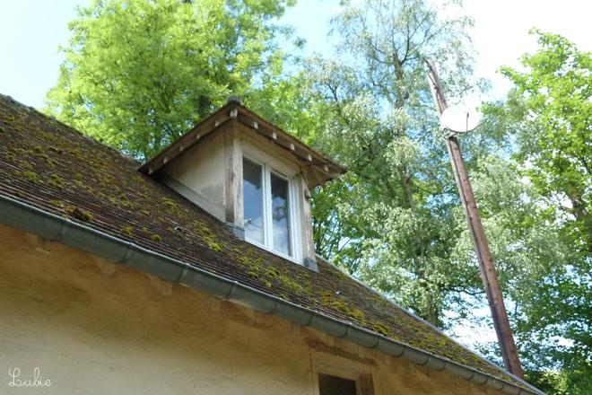 焦げ色屋根に緑の苔がポンポンのっています。